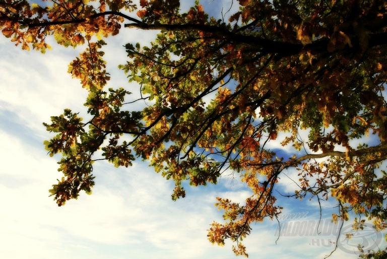 """""""Légy tölgyfa, mit a fergeteg ki képes dönteni, de méltóságos derekát meg nem görbítheti"""" (Petőfi S.: Ha férfi vagy, légy férfi)"""