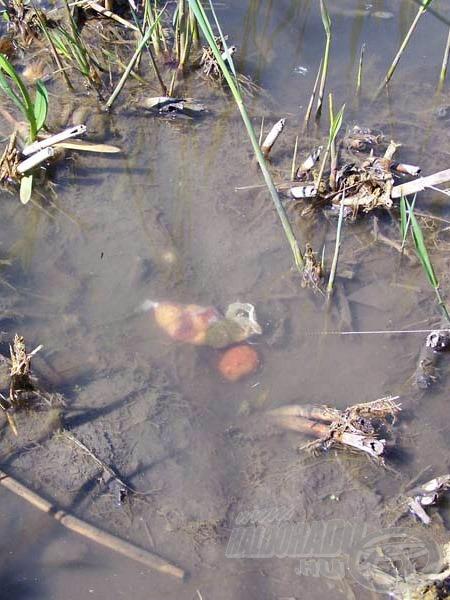 Így viselkedik a vízben a fenékre leengedett csalikkal megtöltött PVA háló. Ennél nem létezik koncentráltabb etetés!