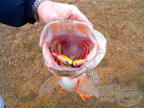 Nem irigylem azt a halat, akit megtámad