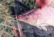 Szezonvégi horgászatok I. rész - Késő őszi pontyok nyomában