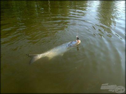 Sziklából vizet facsarni - Balinpergetés állóvízen