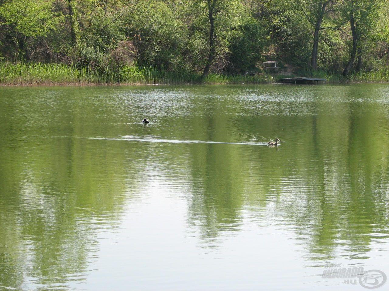 Az Alsónémedi Öreg-tó