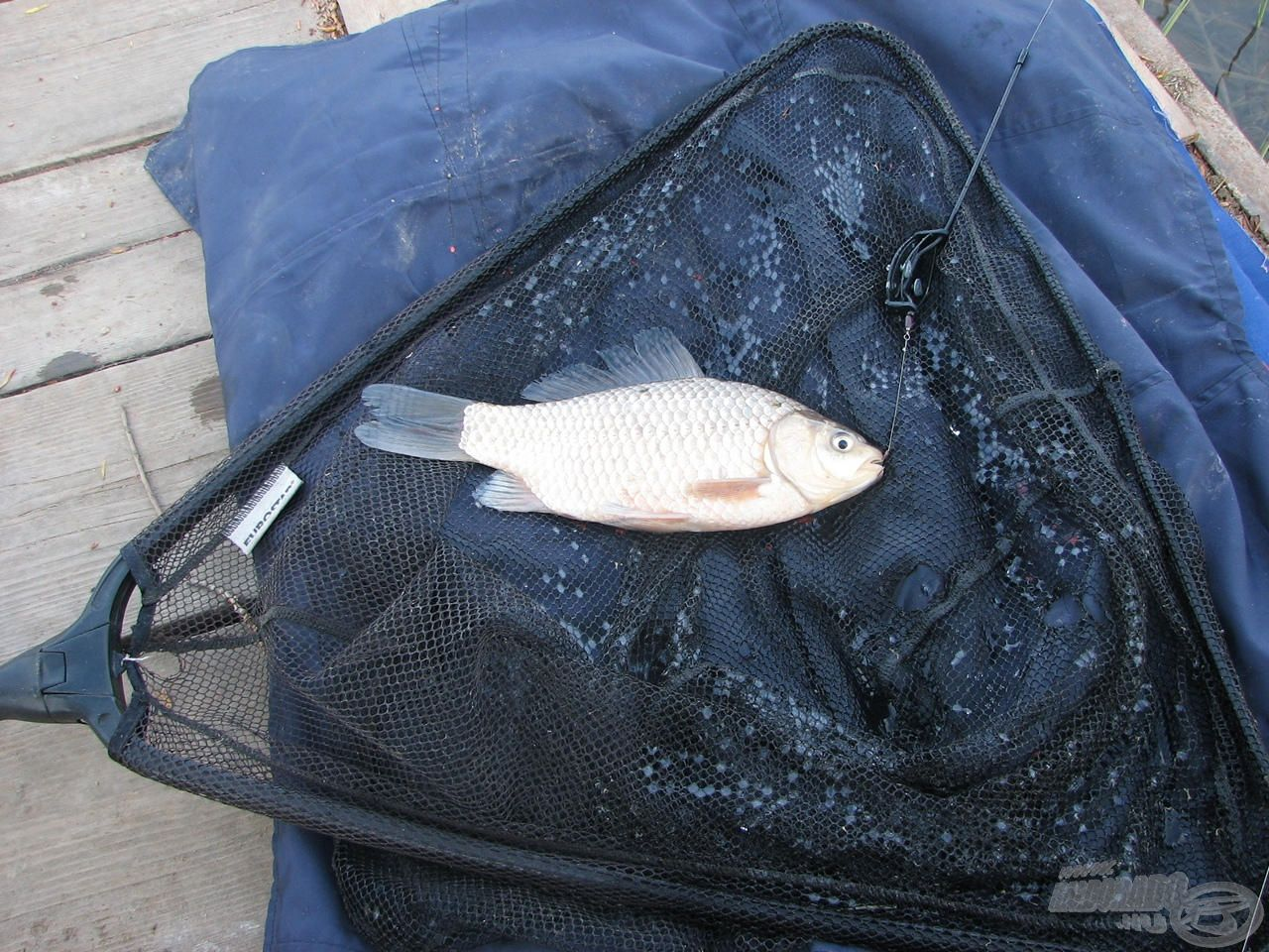 Az első nap utolsó hala