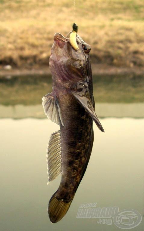 A horgászat első halának nem kimondottan örültem