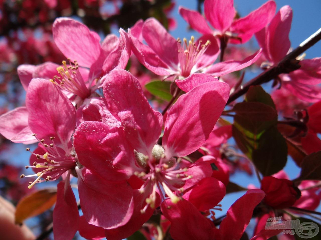 Egy kis tavasz mindenkinek kell...