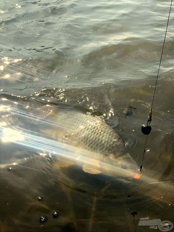 Szép sorban érkeztek a halak