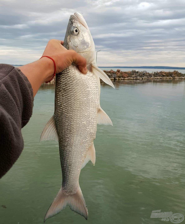 A balin az egyik kedvenc ragadozó halam, imádok rájuk horgászni