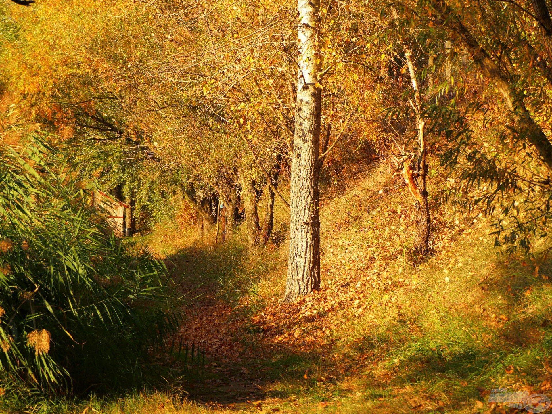 """A természet is felvette őszi """"köntösét""""…"""