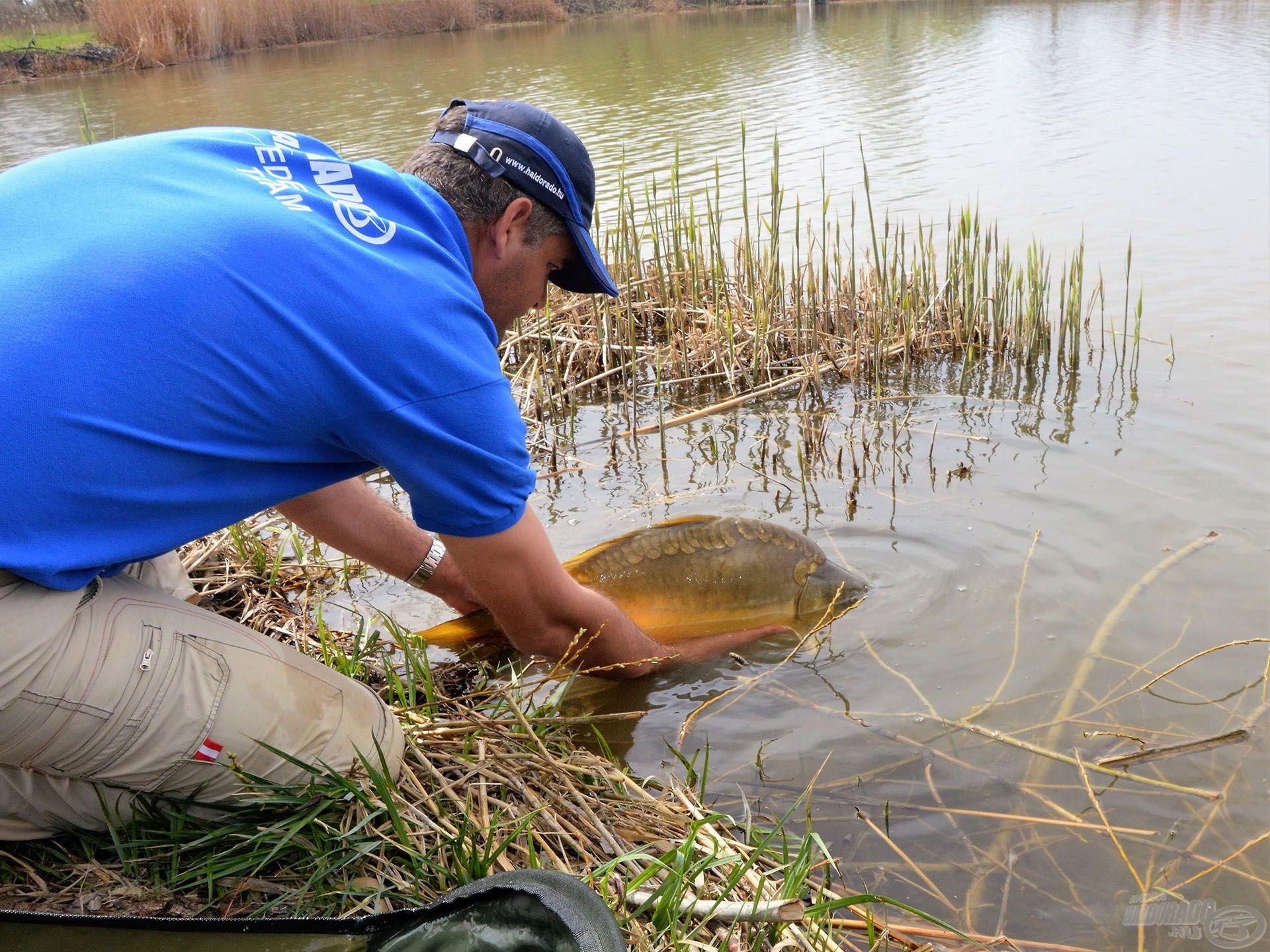 Szép, egészséges halak lakják a Róth-tavat, vigyázzunk rájuk!