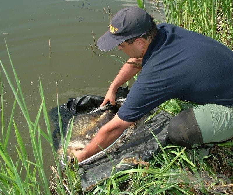 Mesterünk a fotózást követően kíméletesen visszahelyezte zsákmányát a tóba