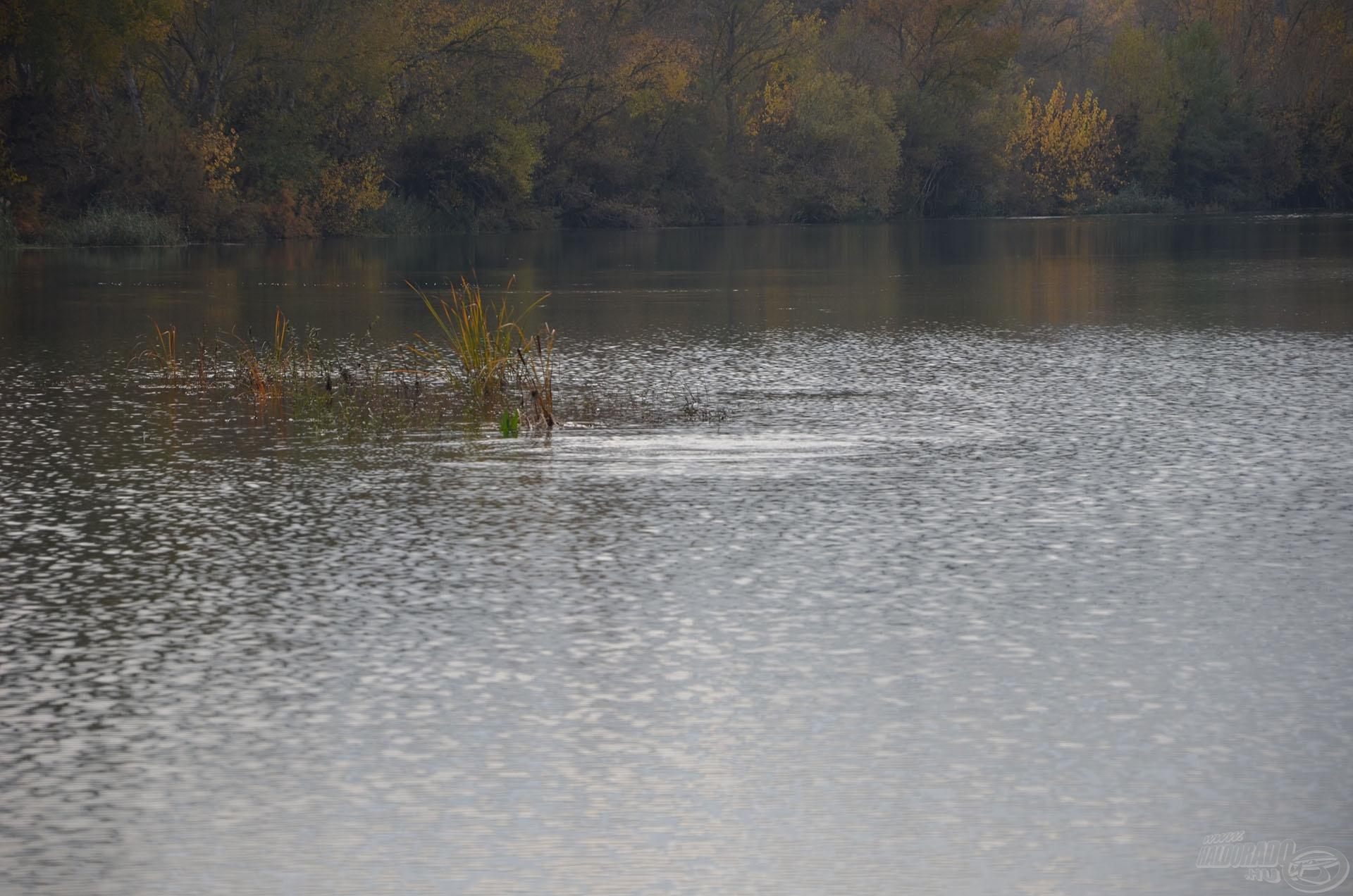 A víz elkezdett áradni, amely varázsütésszerű változást eredményezett. A halak egy része a parti sekély vízbe úszott, a mélyebb területen tartózkodók pedig aktív táplálkozásba kezdtek