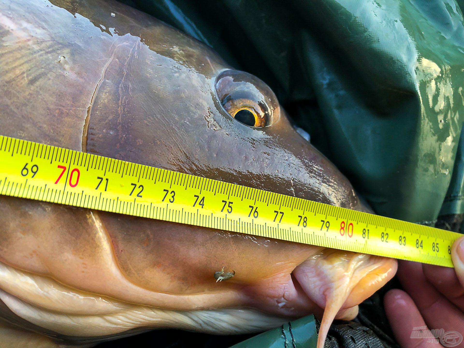 83 cm hosszú