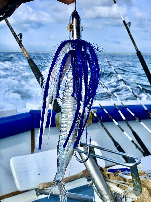 Az egyik legfogósabb nagyhal-csali