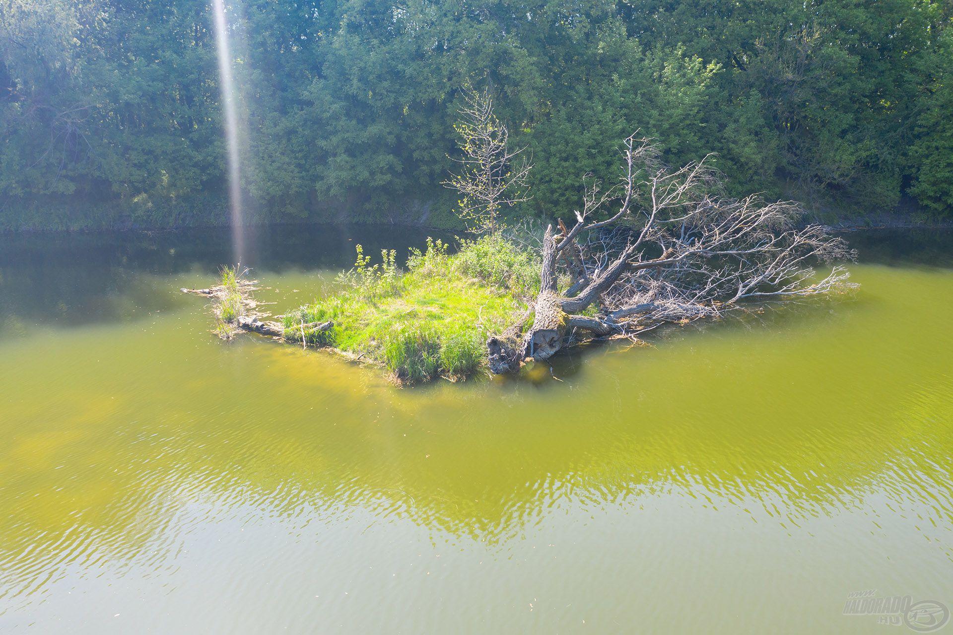 Ahogy a nap megvilágította a túlparti sekély vizet, az addig aktív pontyok biztonságosabb, mélyebb vizek felé vették az irányt