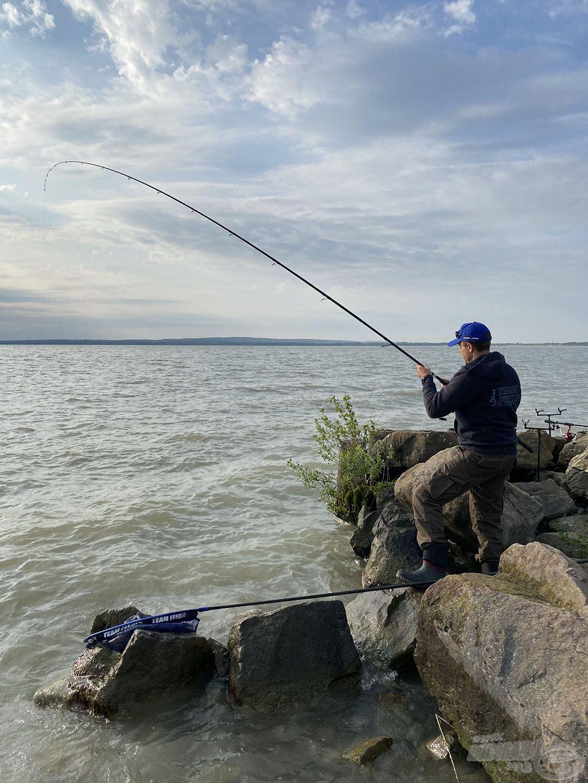 A hosszú bot nemcsak a dobások során, hanem fárasztásnál is jó szolgálatot tett, könnyebb volt vele a partvédő kövezéstől elterelni a halakat