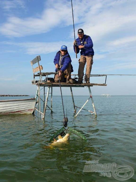 Karcsi segített a halak biztonságos szákba terelésében