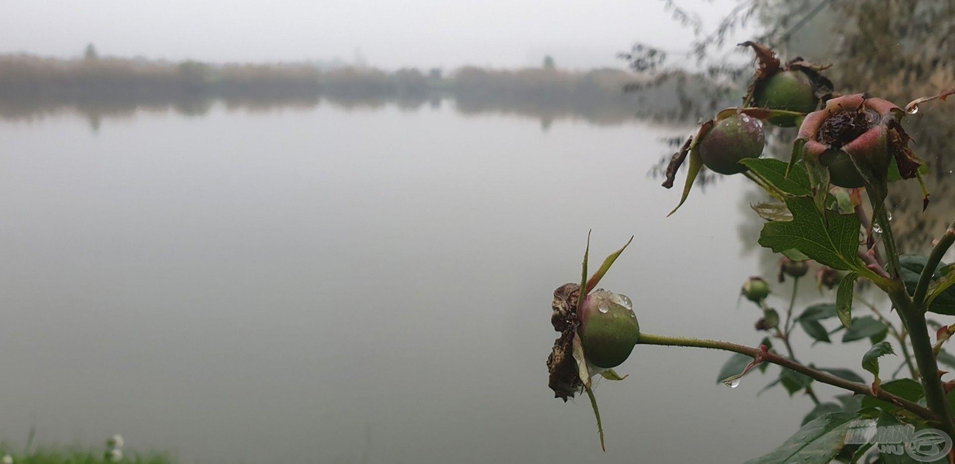 Ködös reggel a Gyékényes Horgásztavon