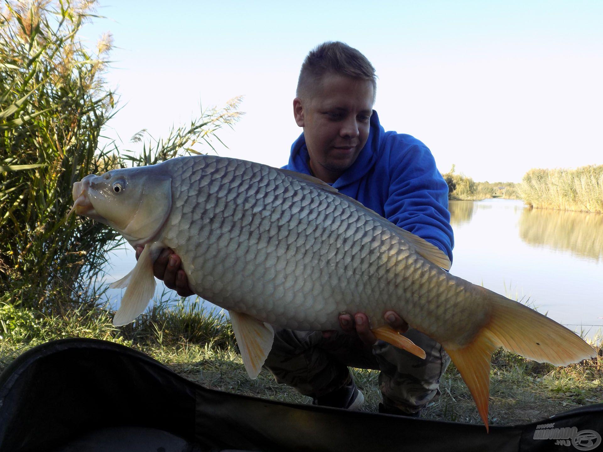 … igazán nem panaszkodhattam, gyönyörű és egészséges halakkal ajándékozott meg ez a kora őszi horgásznap