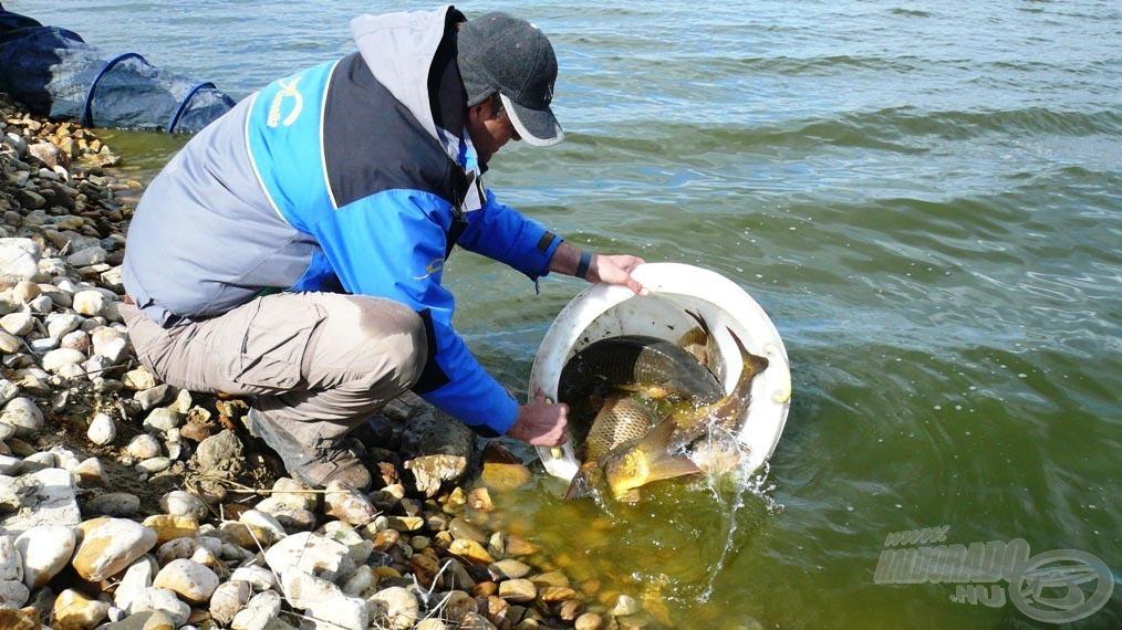 Első mérlegelésemet engedem vissza, szerencsére az összes hal hamar elúszott!