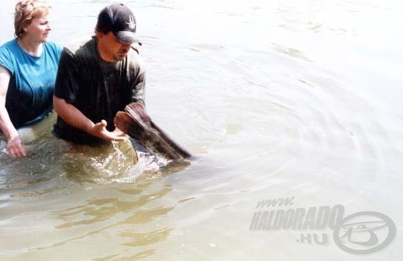 Az olasz halászok nem biztos, hogy örültek ennek a mozdulatnak! A harcsa tovább élhet a Pó folyó deltájában!