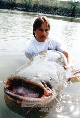 A horgásztábor vezetője is beállt a harcsa mögé egy fotó erejéig.