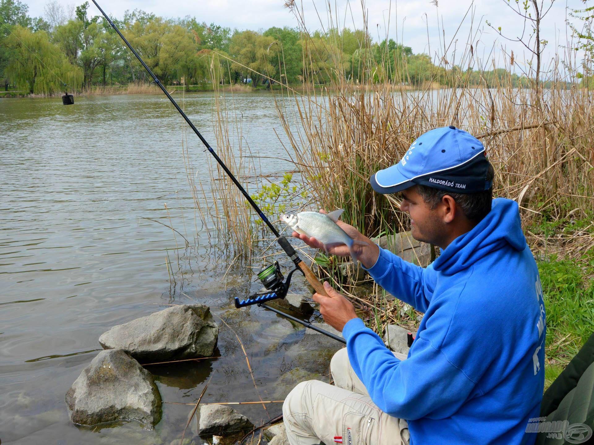 Az ilyen méretű halakból nagyon sokat lehet fogni, rendkívül szórakoztató és eseménydús a rájuk történő horgászat