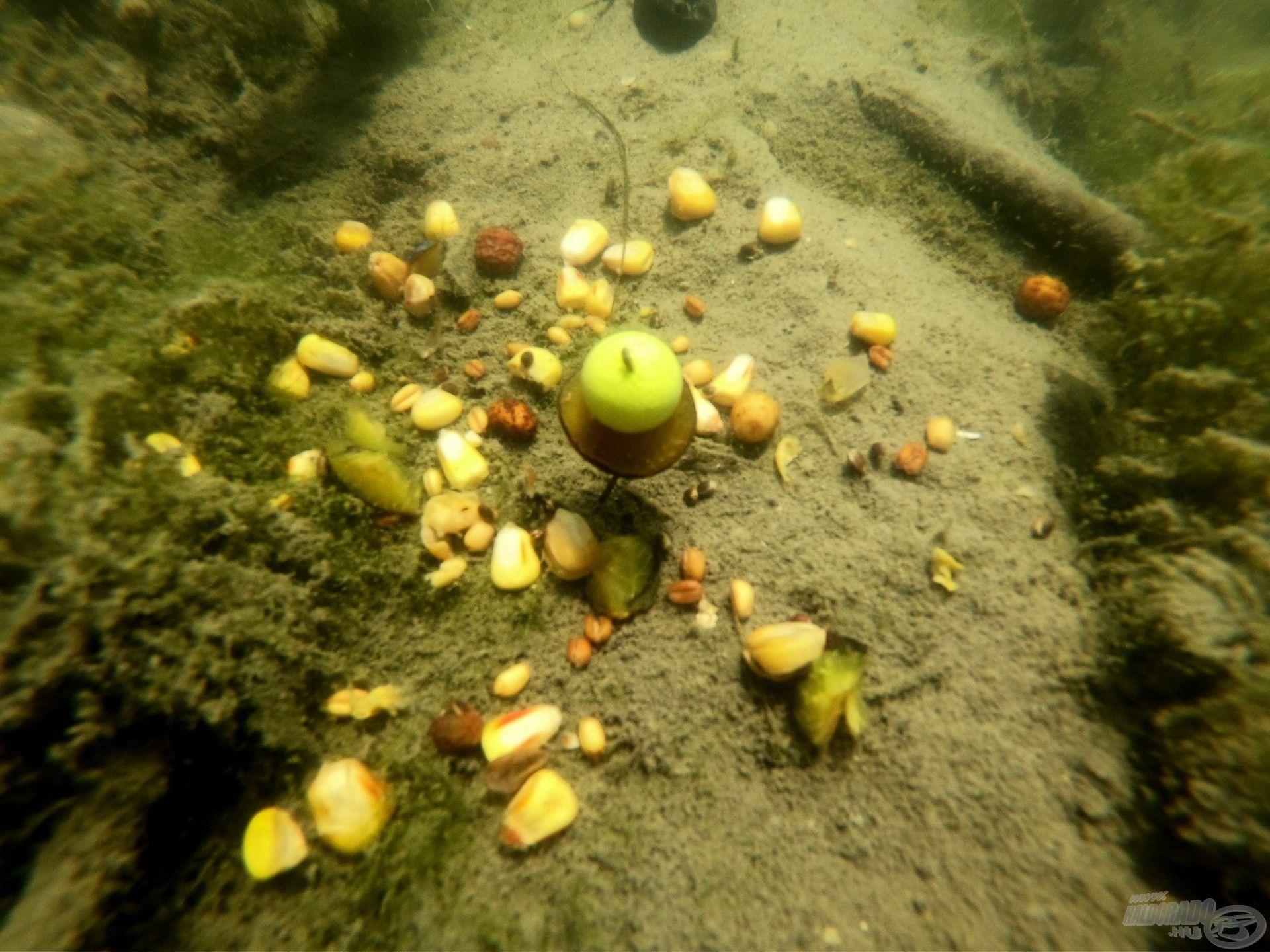 Ennyit lát az amur mielőtt felhörpinti a csemegéket