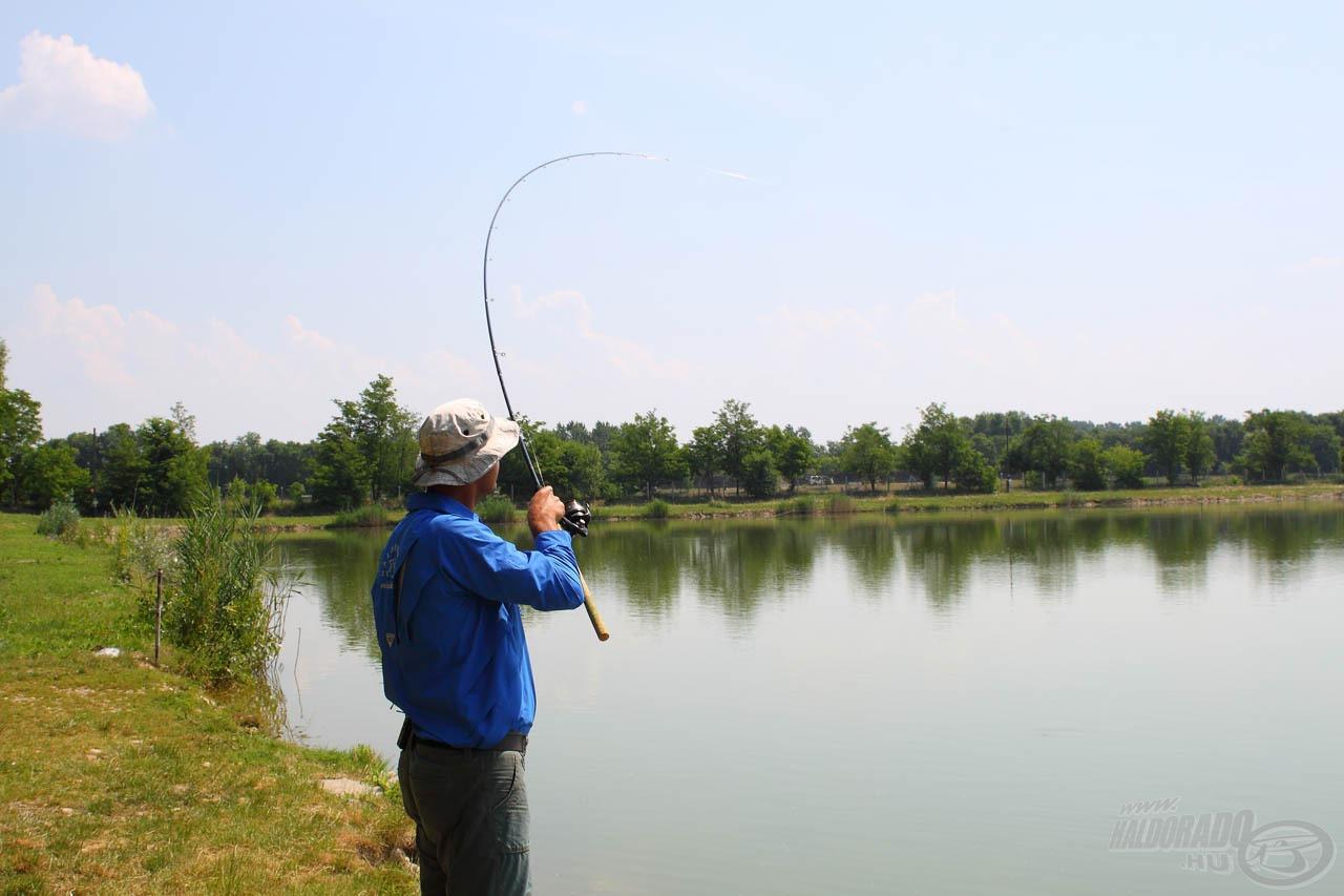 Bevágáskor rendszerint karikába hajlik a bot, mert a halak a kapás pillanatában már lendületben vannak