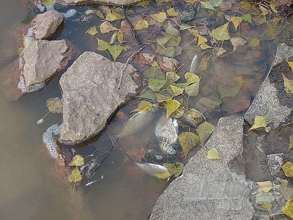 … tetemét sodorta a víz