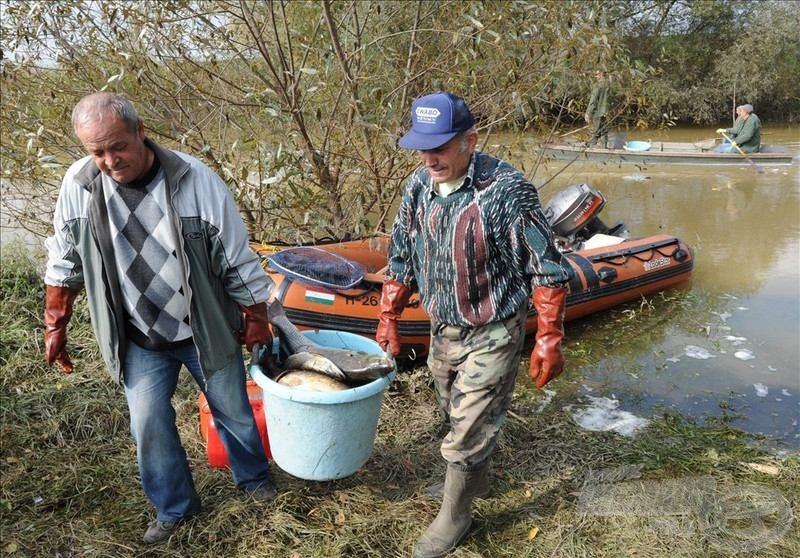 Napokig szedték a rengeteg elpusztult halat az emberek