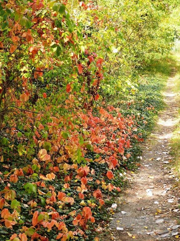Őszi ösvény