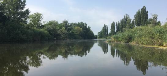 Nagybaracskai Ó-Duna (Tischer)